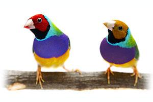 Sicherer, schonender und tierfreundlicher Vogelversand