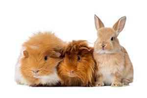 Sicherer, schonender und tierfreundlicher Kleintierversand