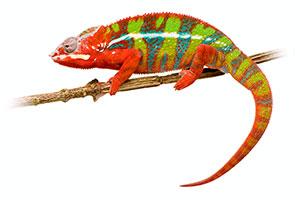 Sicherer, schonender und tierfreundlicher Reptilienversand