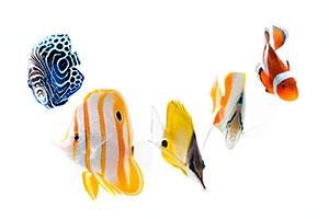 Sicherer, schonender und tierfreundlicher Fischversand