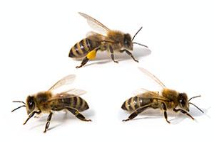 Sicherer, schonender und tierfreundlicher Insektenversand